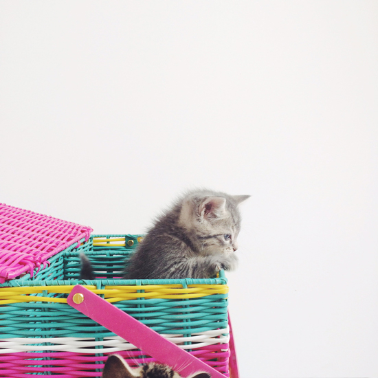 Oh Joy for Target picnic basket / Photo by Jen Gotch