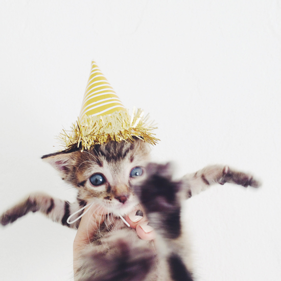 Party Kitten! (via Jen Gotch)