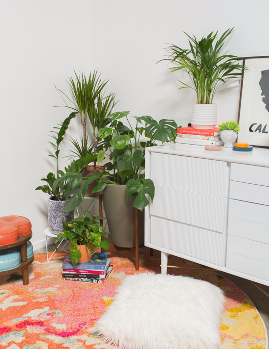 3 Ways to Bring Plants into Your Home