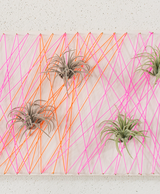 Living Wall Art with Air Plants  sc 1 st  Oh Joy! - Typepad & living wall art! - Oh Joy!