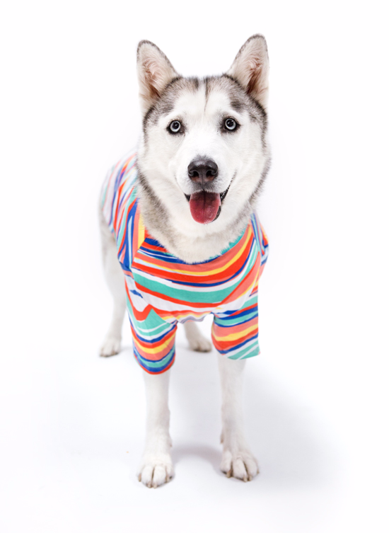 Oh Joy for Target Pets Collection / Photo by Grace Chon