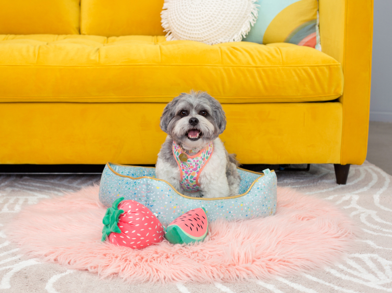 NEW: Oh Joy! for Petco Summer Collection
